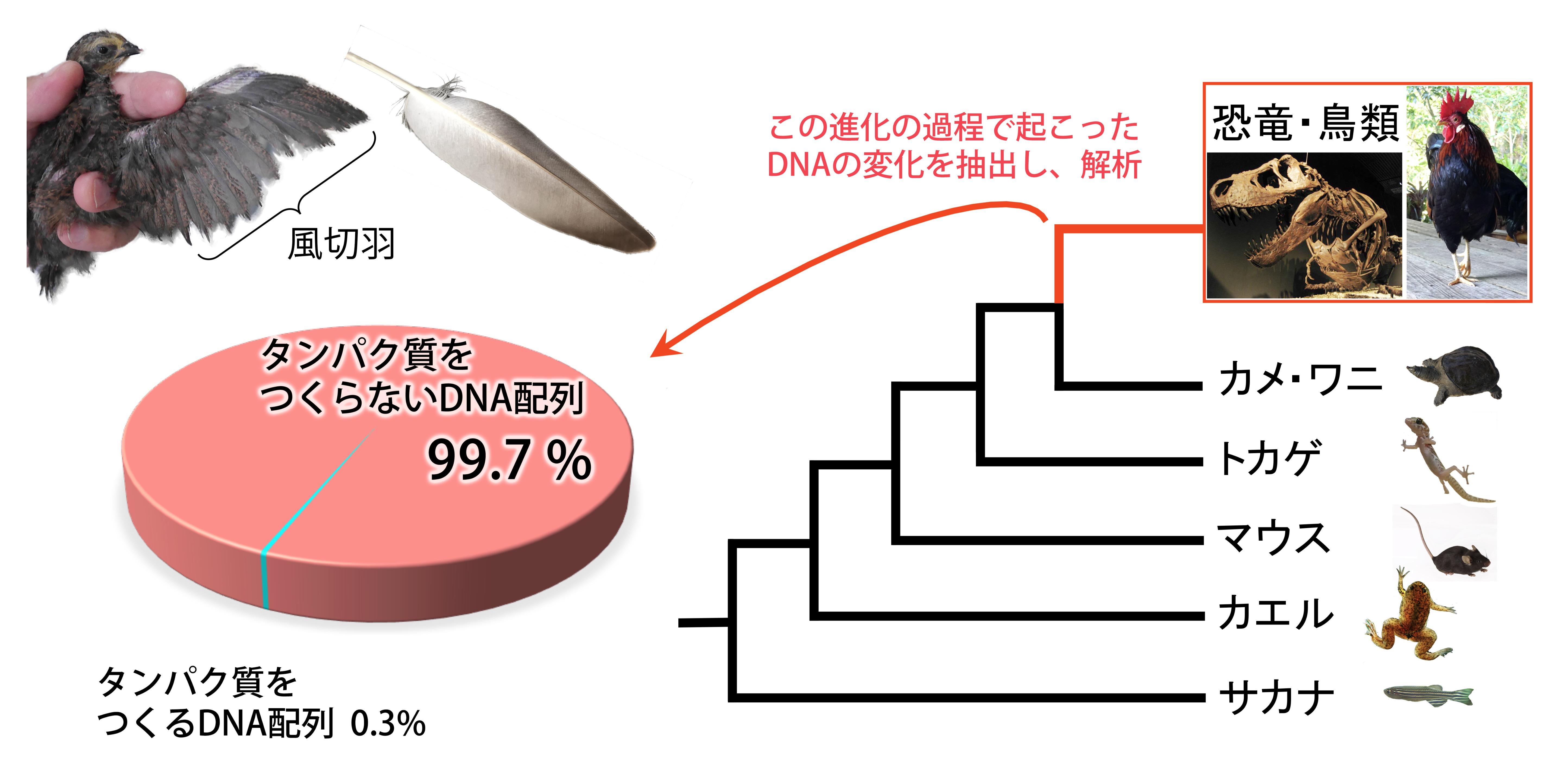 入江さん作の概要図